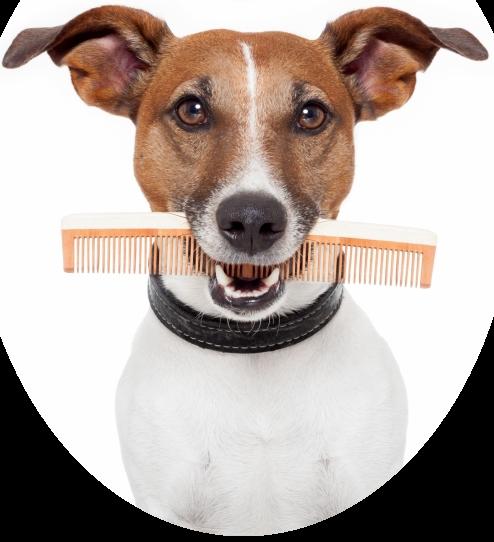 hondje form dienstenpagina afgerond